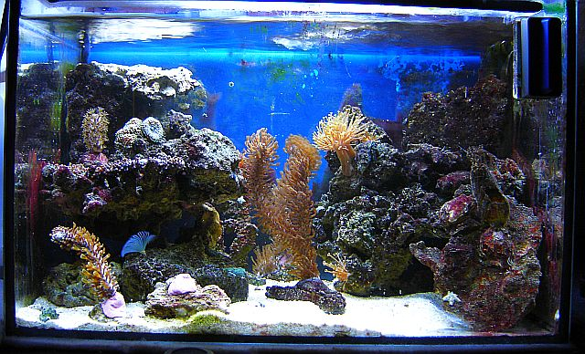 Unser erstes meerwasserbecken aquarium forum for Salzwasser aquarium fische